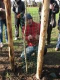 Boomkorven aanbrengen tegen vraat