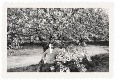De Grote Lier: Bloeiende kersenboom