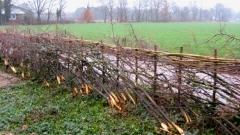 Gevlochten heg van krenteboomjes, Lierseweg
