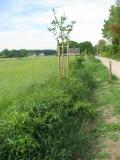 Gebogen heg in de zomer