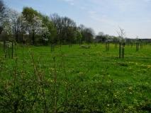 Boomgaard met erfgoedfruitbomen
