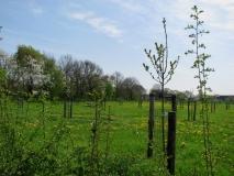 Boomgaard met erfgoed fruitbomen