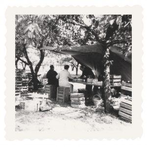 De Grote Lier: Fruitstalletje aan de Kuilseweg