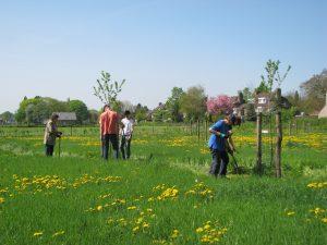 Boomspiegels van de fruitbomen schonen