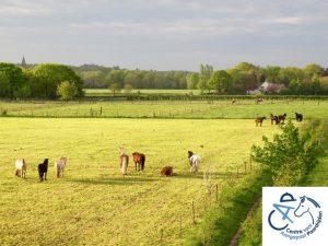 Therapie -en rijpaarden in de wei